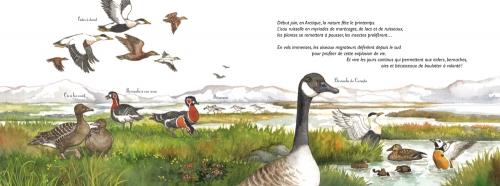 au_pole_nord_ou_au_pole_sud_int1_editions_ricochet.jpg